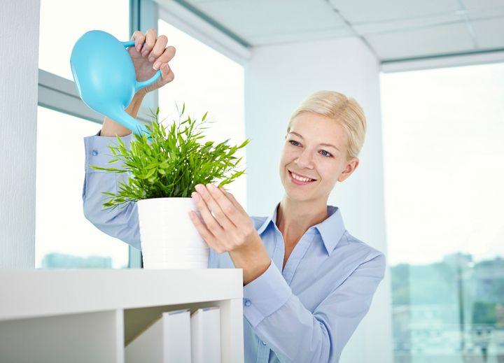 Vergessen Sie die Büropflanzen nicht.