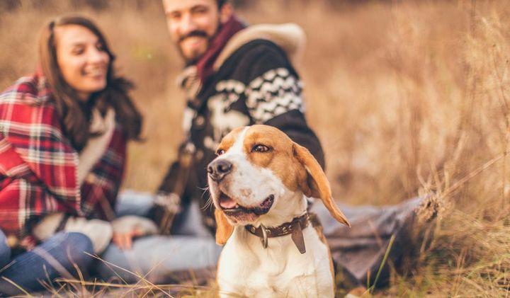 Ein Hund fühlt sich am wohlsten, wenn er mit seinem Rudel unterwegs ist.