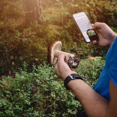 Virtuelle Helfer machen die Pilzsuche einfacher – und sicherer.