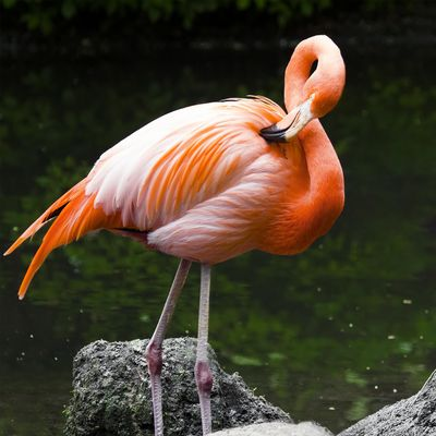 Erkunden Sie mit uns die Tierparks dieser Welt.