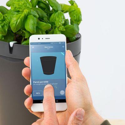 Parrot Pot: Hilfe für clevere Gärtner.
