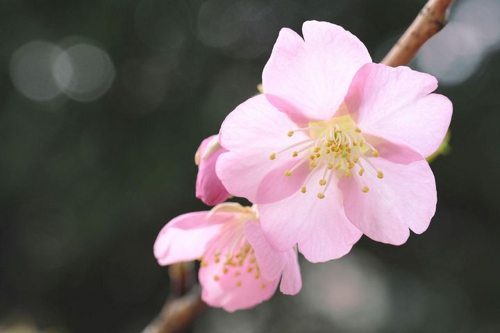 """Motive aus der Natur eignen sich ideal für den """"Bokeh""""-Effekt, wie zum Beispiel Blüten, Blätter oder Wassertropfen."""