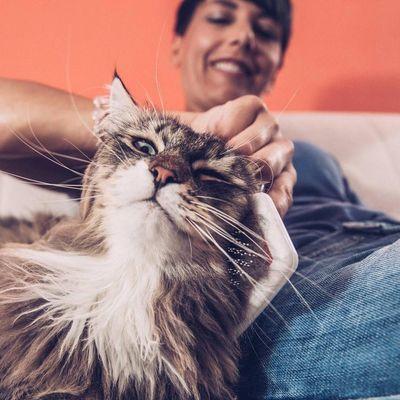 Regelmäßiges Bürsten freut das Tier und hilft die Couch von Härchen freizuhalten.