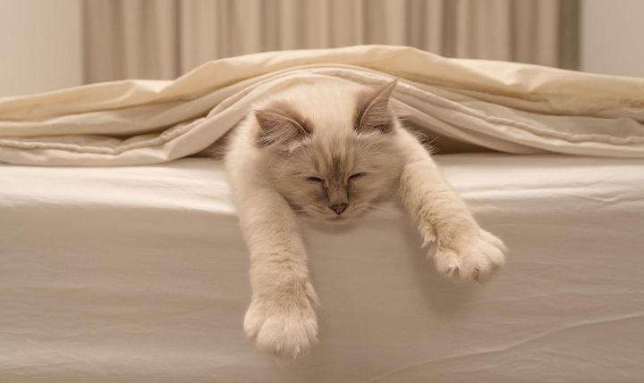Mit unseren Tipps finden sich weniger Tierhaare an Couch und Bett.