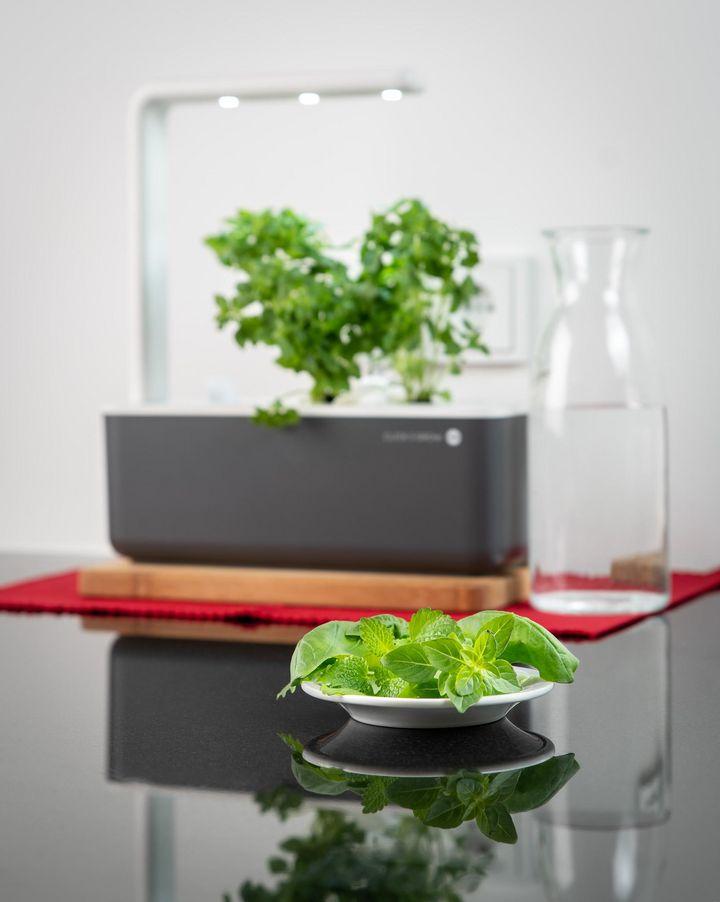 Sobald die Pflanzen reif sind, kann geerntet werden.