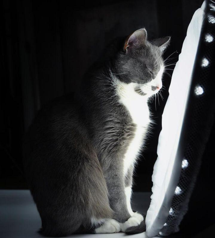 Katze vor einer Tageslichtlampe