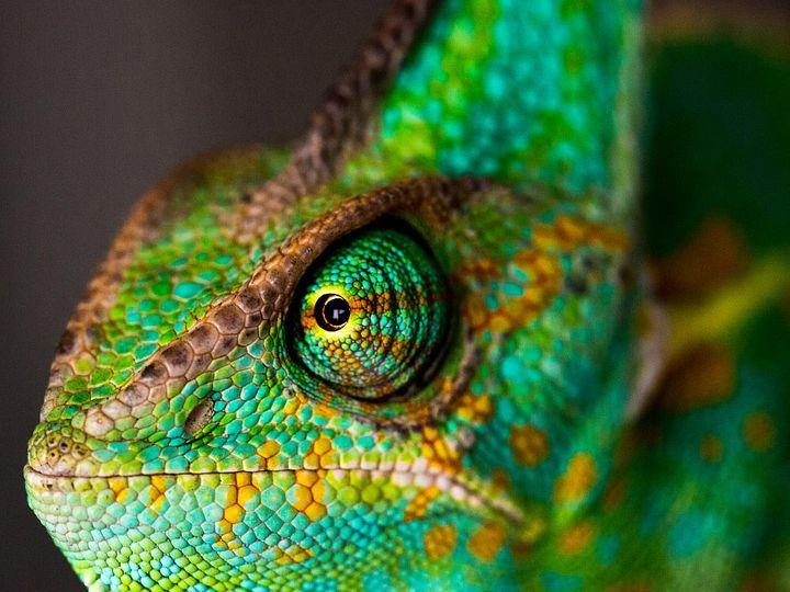 Makrofotografie - Beispiel Tierfoto, Auge im Detail