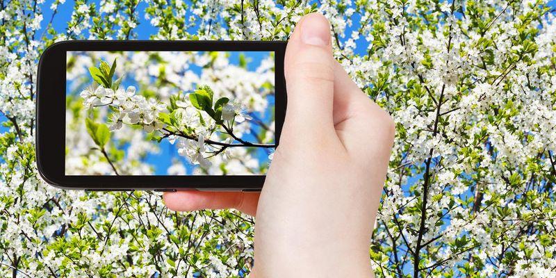 Pflanzenbestimmungs-Apps helfen beim Identifizieren.