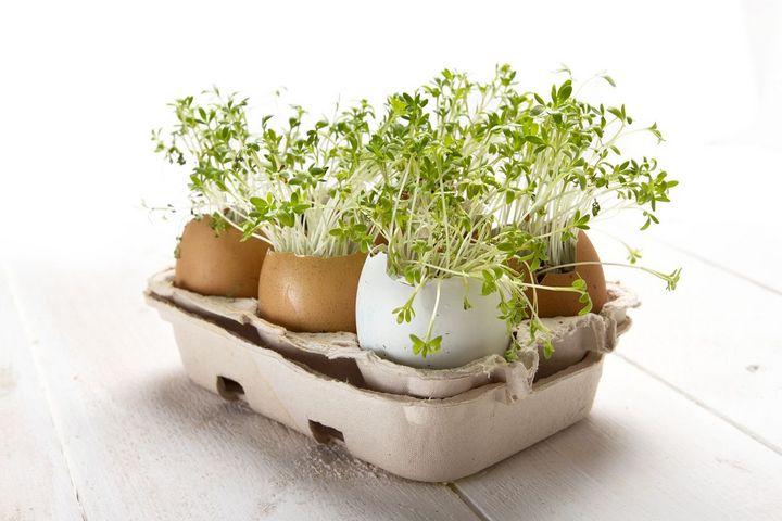 Sprossen sorgen für eine gute Versorgung mit Vitaminen, Mineralien und sekundären Pflanzenstoffen.