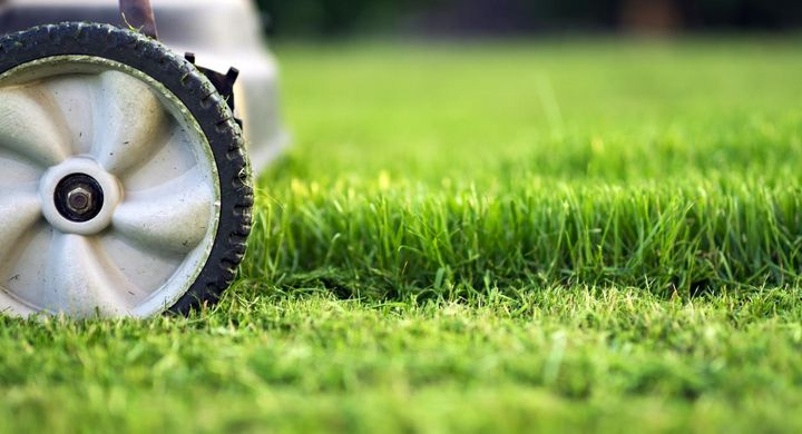 Rasenmähroboter arbeiten das geschnittene Gras wieder in den Boden ein.
