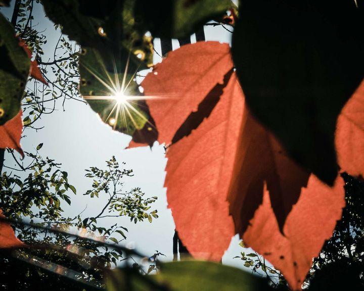 Sonnenstern mit Herbstlaub.