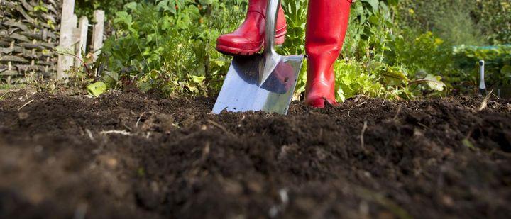 Herbstarbeit: Neue Rasenflächen umgraben und Grassamen aussähen.