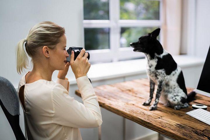 Foto-Lexikon: Das Haustier richtig fotografieren.