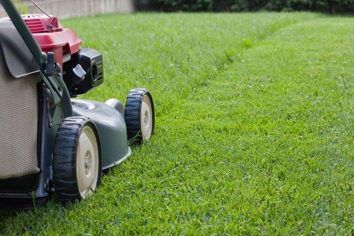 So halten Sie den Rasen gepflegt.