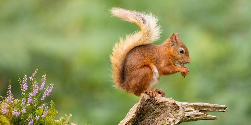 Die besten Eichhörnchen-Profile auf Instagram.