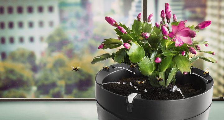 Parrot Pot, der intelligente Topf, überwacht und gießt die Pflanze.