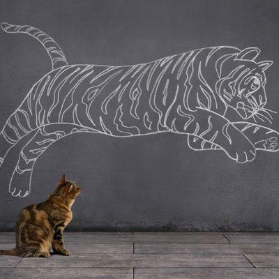 Machen Sie aus dem Ihrem Kätzchen einen Tiger.
