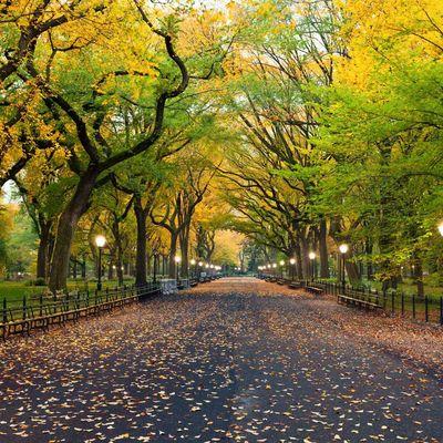 Der Central Park ist der wohl bekannteste Stadtpark der Welt