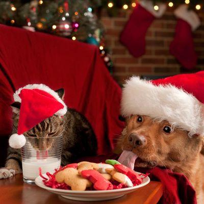 Mit diesen Geschenken wird Weihnachten für Hund und Katze schön.