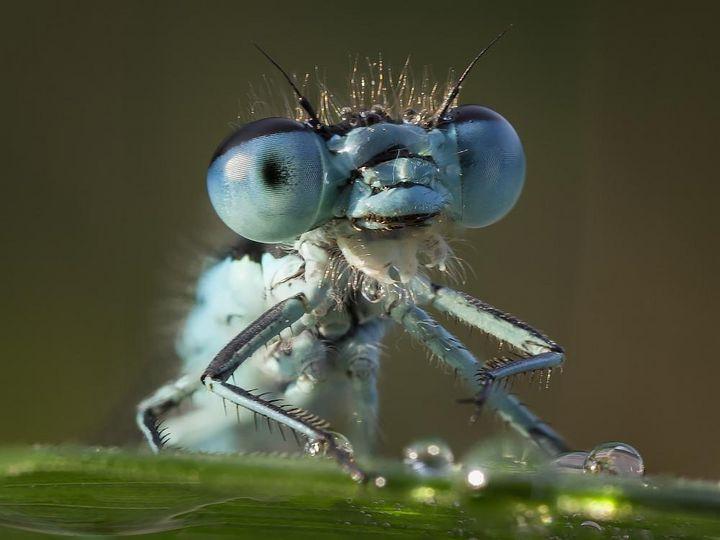Insekten als Beispiel für Makrofotografie