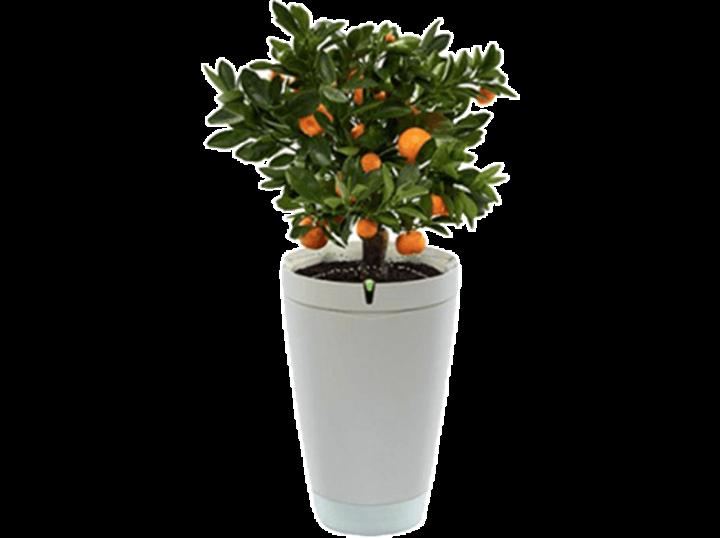 Der Parrot Pot kennt bis zu 8.000 Pflanzen und pflegt und versorgt das ihm anvertraute Grünzeug bis zu einem Monat lang vollkommen selbstständig.