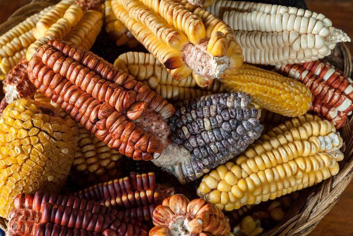 Mais wird vor allem in Lateinamerika gerne zu Mehl verarbeitet.