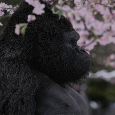 """Blu-ray-Tipp: """"Planet der Affen: Survival"""""""