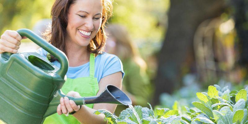 Pflanzen brauchen regelmäßig Wasser und Nährstoffe