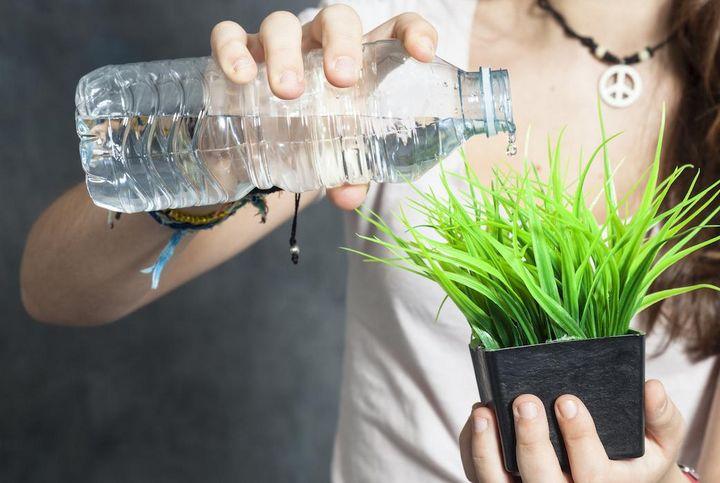 Pflanzen richtig bewässern