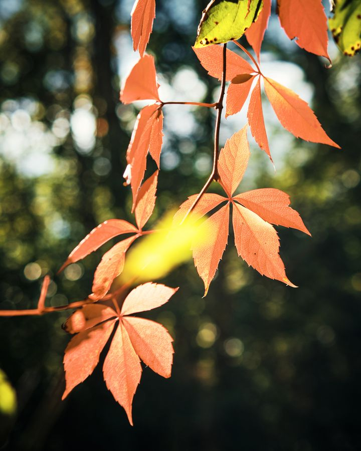 Herbstlaub mit Bokeh-Effekt.