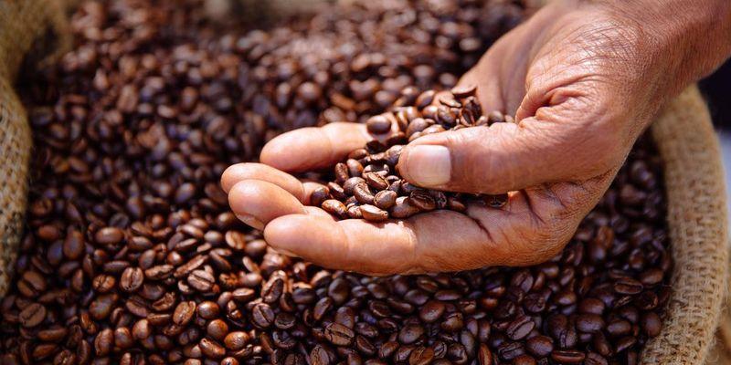 Kaffeewissen: Arabica versus Robusta