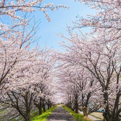 Endlich ist der Frühling da!
