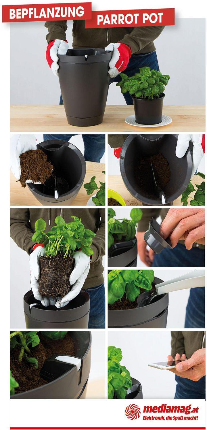 """Bepflanzt wird der """"Parrot Pot"""" genauso wie ein herkömmlicher Blumentopf."""