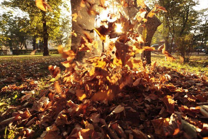 Die Herbstblätter müssen weg vom Rasen.