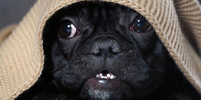 Hunde brauchen beim lauten Jahreswechsel besondere Zuwendung.