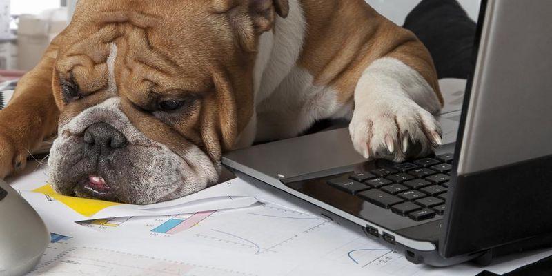 Wuff! Auch Hunde mögen Technik.
