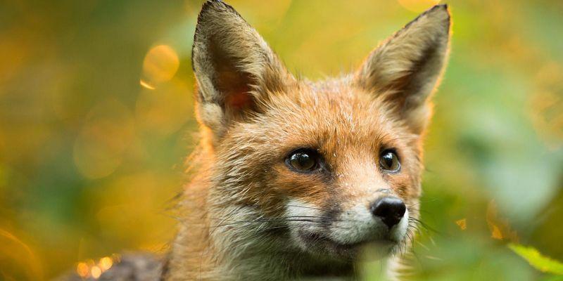 Die spannendsten Wildtier-Fotos auf Instagram.