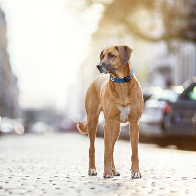 Tractive GPS 2: smartes Haustier-Navi