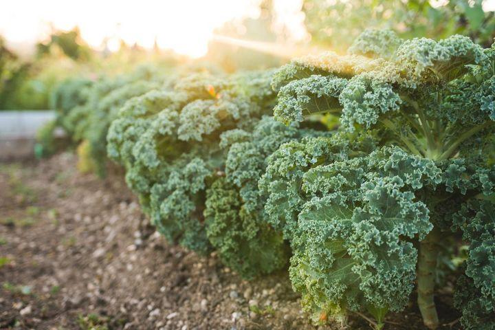 Grünes Gemüse und Kräuter enthalten viele Vitamine, Mineralien und Spurenelemente.