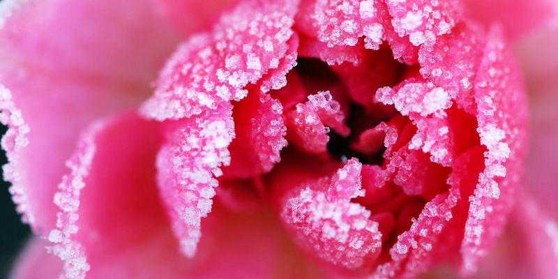 Schnittblumen mögen kühles Klima.