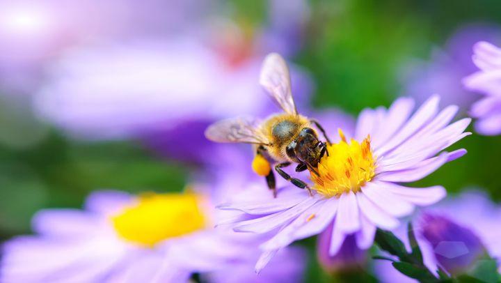 Vogelschutzhecken aus blühenden oder Früchte tragenden Sträucher sind ideal für Bienen, Hummeln und viele andere Insekten.