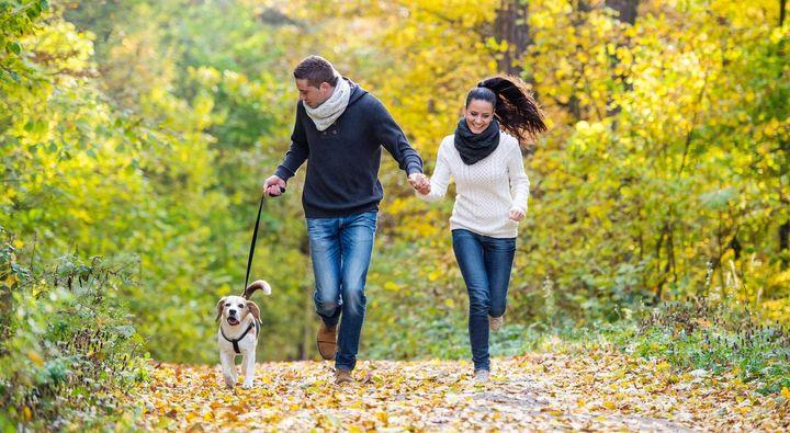 Gemeinsame Aktivitäten verbessern den Zusammenhalt von Tier und Mensch.