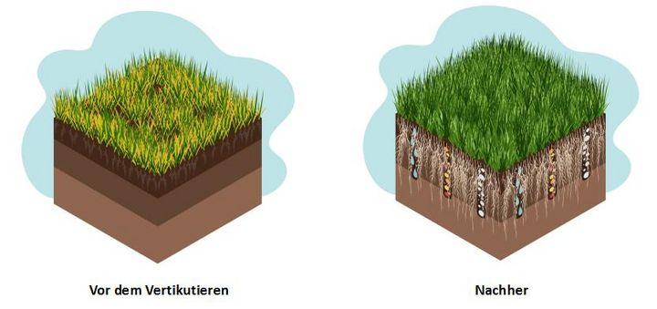 Beim Vertikutieren gelangen Nährstoffe und Wasser in den Boden.