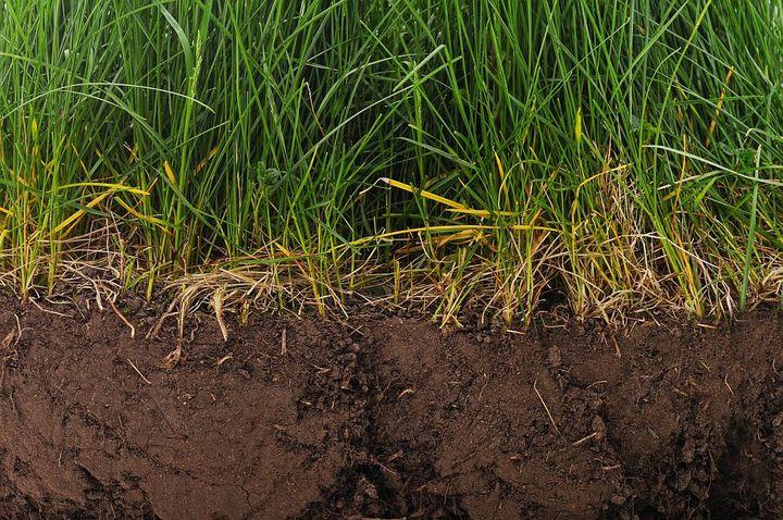 Nach dem Vertikutieren können die Graswurzeln wieder besser wachsen.