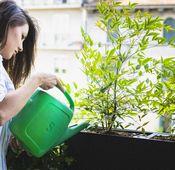 Nummer 4: Pflanzen gießen