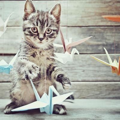 Cat Content ist im Internet weiterhin beliebt