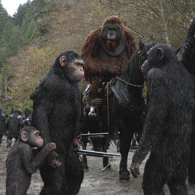 Die Affen rücken zum Krieg aus.