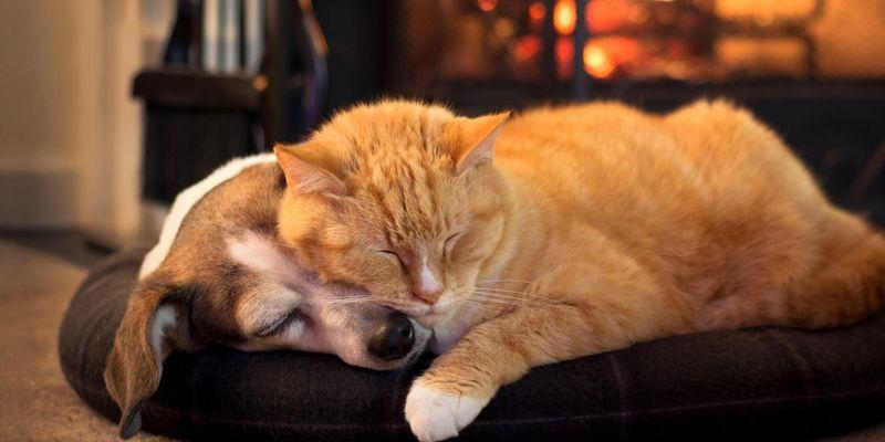 3 Geschenktipps für Hund & Katz