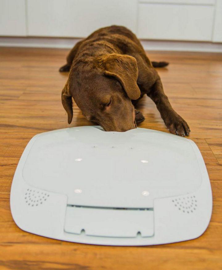 Smarte Technik für Hund und Katze