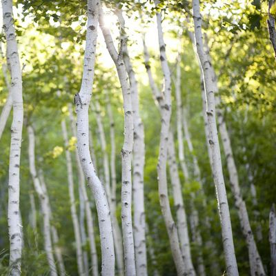 Twittering Trees - der Wald geht online